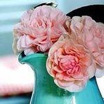Rose Petrotta