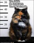 kitty porter