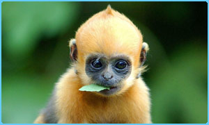 Worlds cutest baby monkey care2 news network worlds cutest baby monkey voltagebd Image collections