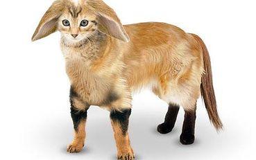 half cat half dog