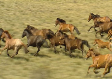 Image result for wild horses  gif