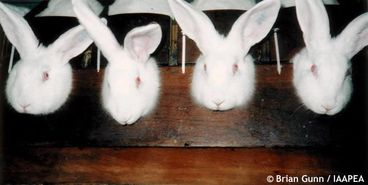 Animal Experimentation : Logical Contradiction Whose Days A ...