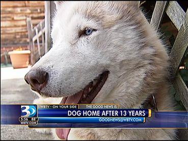 Når hunder dukker opp igjen etter å ha vært savnet i mange år! thumbnail