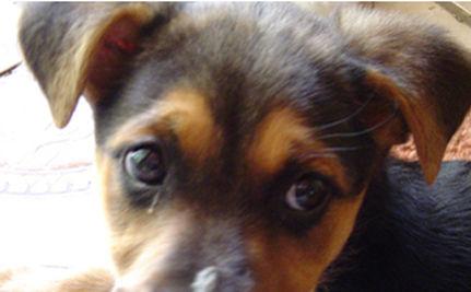 Dog Killer Gets Maximum Prison Sentence