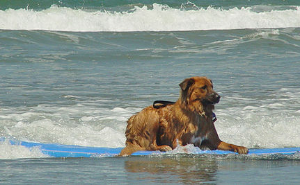 From Service Dog to Surfer Dog (VIDEO)