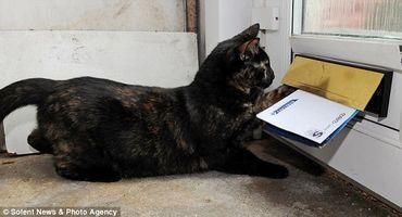 Postman Cat