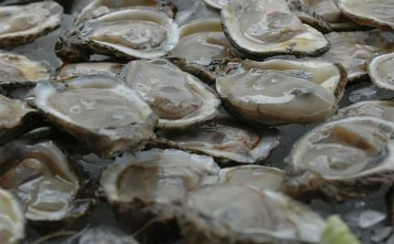 Crude Oil Found In Oysters At North Carolina Restaurant (Video)