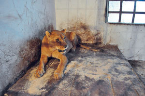 Bad Zoos to be closed across Bulgaria - Care2 News Network