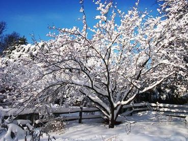 Stone Creek Landscaping Healthy Winter Plant Material