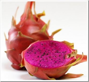Dragon+fruit+cactus+flower