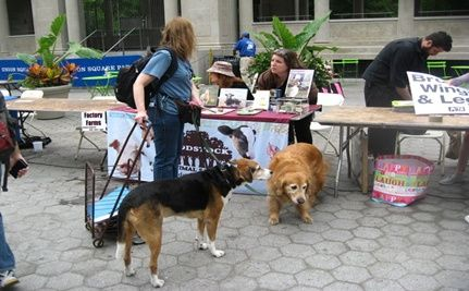 First National Animal Rights Day Held in New York City