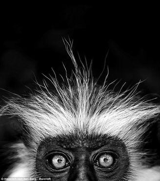 Beautiful Black And White Animal Photos