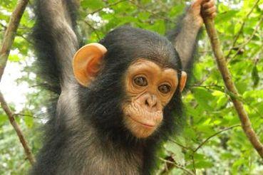 In Defense of Animals ...