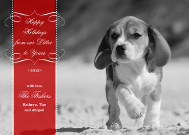 5 ideas for your dog centric holiday greeting card this year care2 5 ideas for your dog centric holiday greeting card this year m4hsunfo