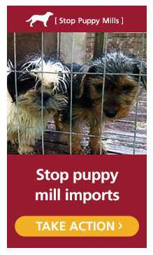 Tell the USDA to Stop Puppy Mill Imports ! PLEASE SIGN