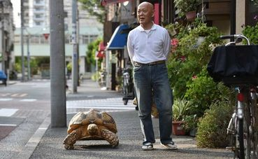 Tokyo Man And His Pet Giant Tortoise Are Internet Hit Care News - Man walks pet tortoise through tokyo