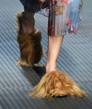 de5dd99a5e7 Petition  Tell Gucci CEO That Using Real Kangaroo Fur in Their New Loafers  Line Is Not Chic!
