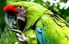 US adds two macaws to endangered species list