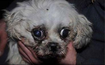 Despite Extensive Citations - Minnesota Amish Puppy Mills Ge