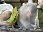 Dozens Of Animals Rescued From Bags In Smugglers Car