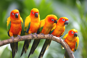Stop Selling Exotic Birds At Petsmart Petco And Pet Supplie