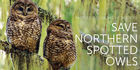 Protect Old Growth Forests To Save Northern Spotted Owls PETITION
