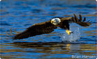 Defend Bald Eagle Habitat along the Mississippi River PETITION