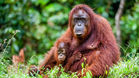 Safe Zone in Indonesian Rainforest  PETITION