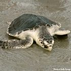 Sign : Help Protect Oceans and Wildlife from Offshore Oil Drilling