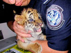 Teen sentenced to 6 months for smuggling tiger cub across border