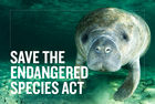 Stop Trump from Gutting the Endangered Species Act PLEASE SIGN