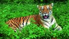 Odisha plan to develop 2nd tiger habitat