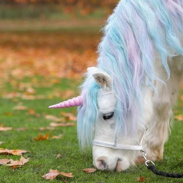 Real-life unicorn experience' accused of demeaning hors    - Care2