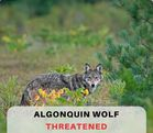 Save Our Endangered Species PLEASE SIGN