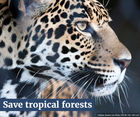 Tell Cargill to end its role in tropical deforestation and save the jaguar