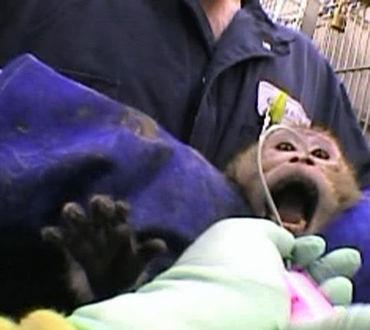 animal testing, torture,