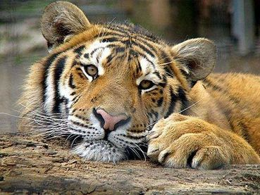 Chinese animal protection authorities target online wild ani ...