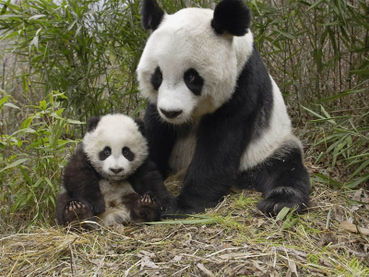 Animal rights in China: A small voice calling - Care2 News Network