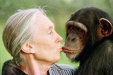 observing jane goodall