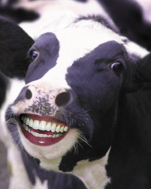 Cow Poop Power Could Provide 3% of North American Energy - Care2 ... 8fe5cc6c7e29