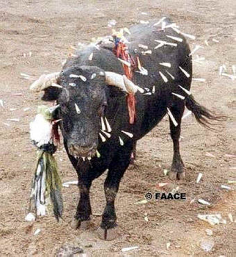 Animal welfare and rights in Spain
