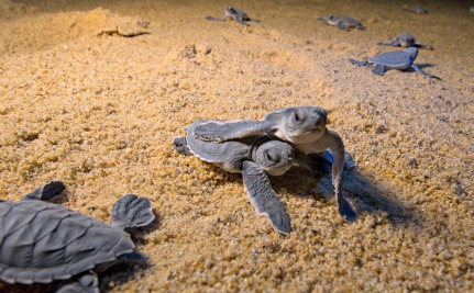 Save a Turtle Hatchling