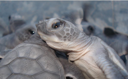 Thank You From Butterfly Rewards Partner – Billion Baby Turtles