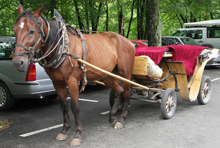 Let�s Put The Brakes On Horse-Drawn Carriages