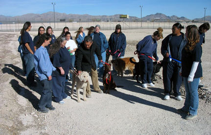 Jails That Rehabilitate Abused Dogs