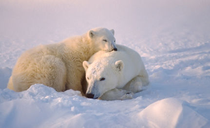 The Arctic Ocean: Can We Keep It Protected?