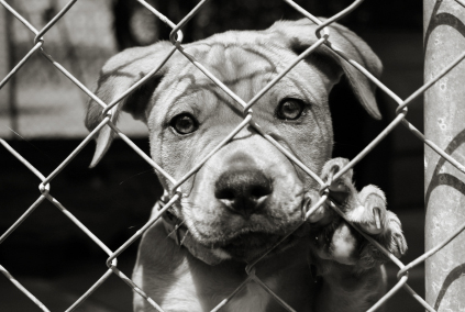 Banning Animal Abusers from Professional Sports