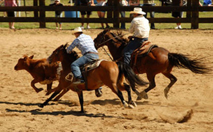 Activists Sue Rodeo Group