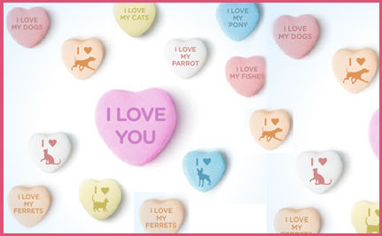 This Valentine's Day Adopt Your New Best Friend!