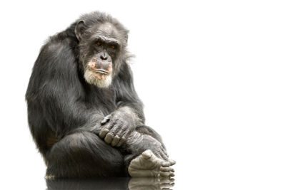 Who Benefits by Keeping a Primate at Home?
